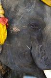 Elefant-rechtes Gesicht Stockfotos
