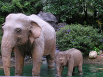 Elefant's family. Mama elefant with her small baby at the river royalty free stock photos