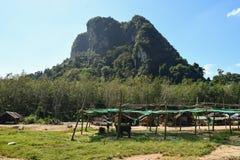 Elefant-Safari Stockfoto