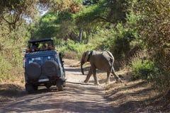 Elefant Safari Lake Manyara Arkivbild