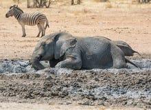 Elefant-Schlamm-Bad lizenzfreie stockfotografie