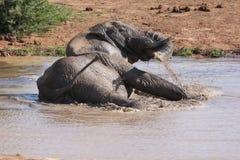 Elefant-Schwimmen Stockbild
