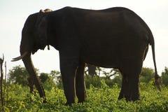 Elefant shilhoutte auf einem grünen Hügel Lizenzfreies Stockfoto
