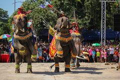 Elefant-Showkrieg Iuthheete Stockfotografie