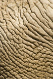 Elefant skin. The pattern and texture of an elefant skin Stock Photos