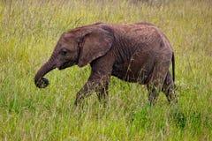 elefant små kenya Arkivbilder