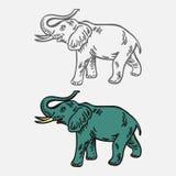 Elefant som isoleras på vit-grå färger bakgrund Arkivfoton