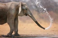 elefant som kastar vatten Arkivbild