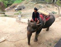 Elefant som kommer att välja upp turister för ritt Fotografering för Bildbyråer