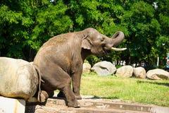Elefant som plaskar med vatten Fotografering för Bildbyråer