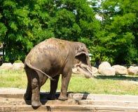 Elefant som plaskar med vatten Arkivfoto