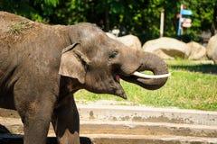Elefant som plaskar med vatten Arkivbild