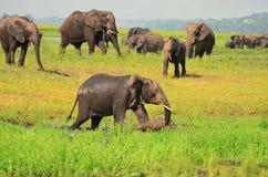 Elefant som spelar i vattenhål Arkivbild