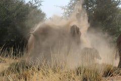 Elefant som spelar med sand Arkivbilder