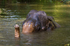 elefant som tar duschen i floden Royaltyfri Foto