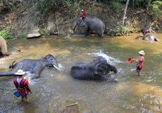 elefant som tar duschen i floden Fotografering för Bildbyråer