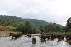 elefant som tar duschen i floden Arkivfoton