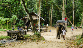 Elefant som trekking Arkivfoto