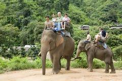 elefant som trekking Fotografering för Bildbyråer
