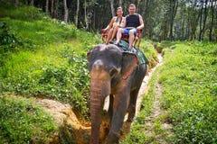 Elefant som trekking i Thailand Arkivbild