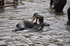 Elefant som trekking i Thailand Royaltyfri Foto