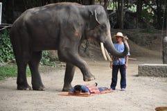 Elefant som trekking i Thailand Arkivbilder