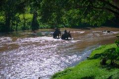 Elefant som trekking till och med djungel i nordliga Thailand Royaltyfri Fotografi