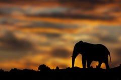 Elefant-Sonnenuntergang Lizenzfreie Stockbilder