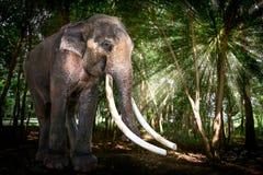 Elefant Stiers Asien im Wald Stockbilder