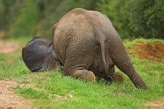 Elefant-Systemabsturz Stockfoto