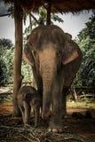 Elefant thailändisch Stockfotografie