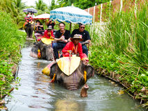 elefant thailand Arkivfoto