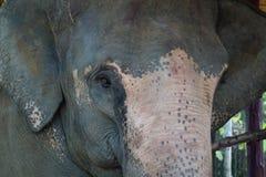 Elefant thailand Royaltyfri Bild