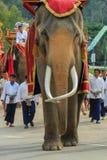 Elefant Thailand, elefant, djur Royaltyfri Foto
