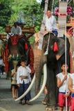 Elefant Thailand, elefant, djur Royaltyfria Foton