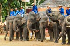 Elefant Thailand, elefant, djur Arkivfoto