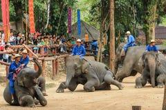 Elefant Thailand, elefant, djur Arkivbilder