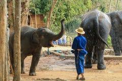 Elefant Thailand, elefant, djur Royaltyfri Fotografi