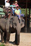 elefant thailand som trekking Arkivfoton