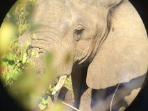 Elefant till och med linsen av ett binokulärt Royaltyfria Foton