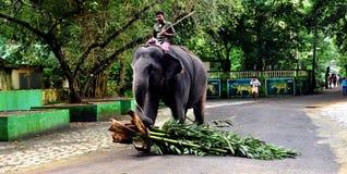 Elefant trainang Mitte im kadanadu, Kerala stockbild