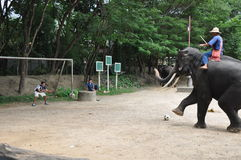 Elefant-Trekking in Thailand Stockfotografie