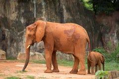 Elefant und Baby Lizenzfreie Stockfotografie