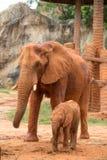 Elefant und Baby Stockfotografie