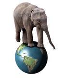 Elefant und Erde Stockfotos