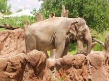 Elefant und Felsen Stockbild
