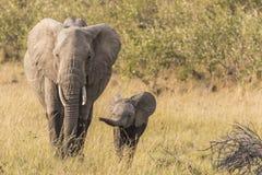 Elefant und Kalb Lizenzfreies Stockbild