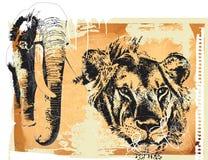 Elefant und Löwe Stockfotos