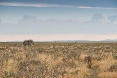 Elefant und Löwin mit konvergierenden Wegen naphtha afrika lizenzfreies stockfoto