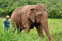 Elefant und Mahout stockfotos